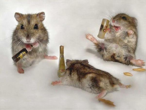 drunk-animals